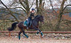 Ein Pferd im Galopp, das ist als ob es mit dem Wind fangen spielt.. Entstanden beim spontanen Bildermachen ...