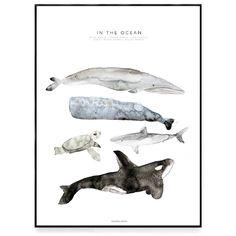 En ljuvlig poster av en akvarellmålning för barnrummet. På motivet syns en liknande blåval, kaskelot, havssköldpadda, vithaj samt späckhuggare. Postern för