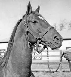 Man O War and no doubt at the end of his shank, his beloved groom, William Harbut