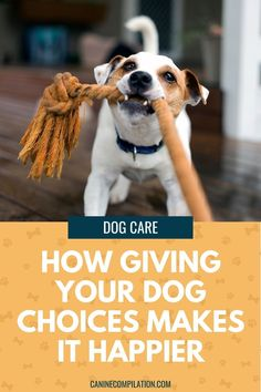 We can improve our dogs' happiness and quality of life by letting them have choice over certain decisions. See how some simple changes will make your dog happier and less stressed Training Schedule, Dog Training Tips, Living With Dogs, Dog Health Tips, Make Good Choices, Positive Reinforcement, Dog Care Tips, Dog Behavior, New Puppy