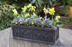 Primula and anemone pot display