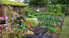 Kitchen vegetable garden | Postcode lottery for allotments / RHS Gardening | jardin potager | bauerngarten