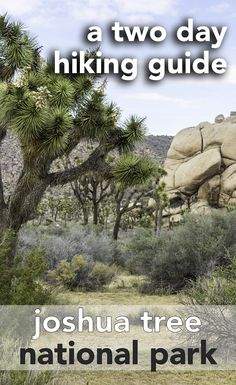 There's so much to see in California's Joshua Tree National Park. This guide takes you through the best way to spend two days to see the sights and experience the hikes.