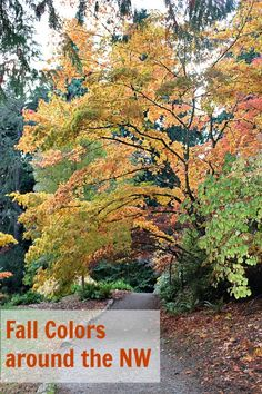 Here are our favorite places around the Northwest to view the Fall colors in Washington & Oregon.