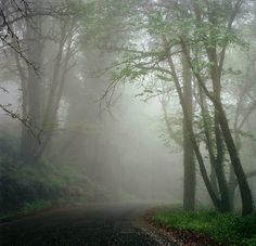 Foggy mornings