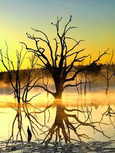 Sunset Tree, Seminole State Park, Georgia