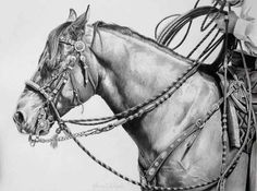 Karmel Timmons' equine art... amazing detail!