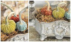 Gorgeous velvet pumpkins