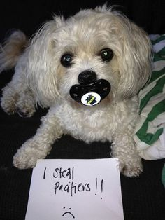 Dog Shaming features the most hilarious, most shameful, and never-before-seen doggie misdeeds. Join us by sharing in the shaming and laughing as Dog Shaming reminds us that unconditional love goes both ways. Baby Animals, Funny Animals, Cute Animals, Animal Funnies, Animal Humour, Funny Dog Pictures, Animal Pictures, I Love Dogs, Cute Dogs