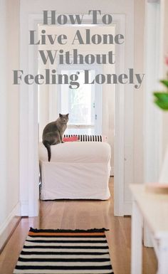 Living in an apartment by yourself doesn't have to be lonely! | Living In An Apartment