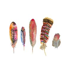 Feather Print - Nature Decor - Watercolor Painting - Archival Print - autumn colors. $28.00, via Etsy.