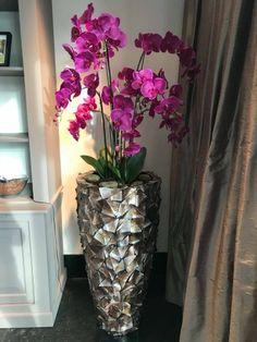 Fuchsia kleurige Orchideeën in Schelpenpot...