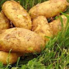 Pěstování brambor v trávě Veg Garden, Growing Plants, Indoor Plants, Baked Potato, Gardening, Planting, Potatoes, Fruit, Vegetables