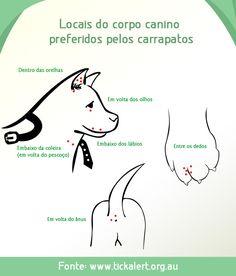 Carrapato