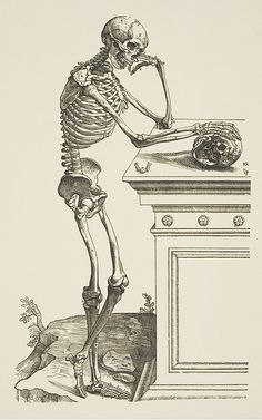 Anatomy Drawing Medical Andreas Vesalius, <i>De humani corporis fabrica libri septem . A Human Skeleton Leaning Against a Tomb Image courtesy of the Wellcome Library, London. Andreas Vesalius, Anatomy Drawing, Anatomy Art, Human Anatomy, Animal Anatomy, Anatomy Study, Memento Mori Art, Arte Obscura, Human Skeleton