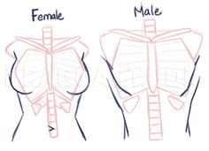 How To Draw Anime Anatomy, Step by Step, Drawing Guide, by PuzzlePieces
