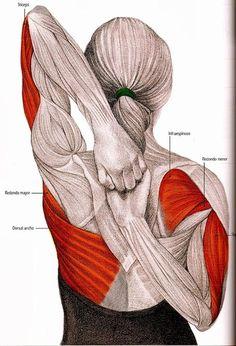 Canınızı acıtan boyun ağrısından kurtaran 5 egzersiz! - Lower Back Pain Relief, Neck And Back Pain, Neck Pain, Muscle Stretches, Neck Exercises, Infraspinatus Muscle, Upper Arm Bone, Yoga Routine For Beginners, Shoulder Joint
