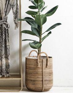 23 Easy House Plants Decor Ideas Balkon – home accessories Easy House Plants, House Plants Decor, Plant Decor, Plant Basket, Rattan Basket, Wicker, Plant Pots, Zz Plant, Faux Plants