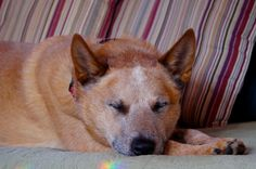 nap time at the cabin.     ~the woods at long pond.