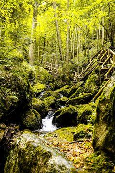Ysperklamm - Ein besonderes Ausflugsziel in Niederösterreich! Alpine Style, Hiking Tours, Ski Slopes, Austria Travel, Forest Landscape, Holiday Accommodation, Skiing, Waterfall, Hotels