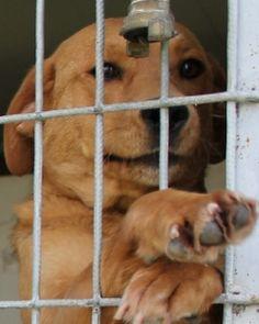Pin Von Johnna Nelson Auf Adopt Me Too Tierheim Tiere Und Hunde
