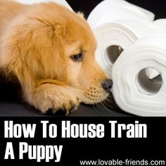How To House Train A Puppy