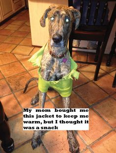 """My mom bought me this jacket to keep me warm, but I thought it was a snack."" ~ Dog Shaming shame - Great Dane - Fully Customized"