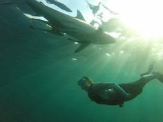 An amazing shot of our shark dive intern, Gretchen, and one of the KwaZulu-Natal sharks.