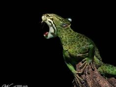Take a mixture from the animal world and add a little Photoshop magic to create some crazy creatures. Check out our world top 10 amazing animal hybrids. Bizarre Animals, Rare Animals, Funny Animals, Photoshopped Animals, Animal Mashups, Funny Photoshop, Creature Concept, Cool Pets, Magical Creatures