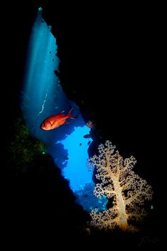Claudia Reef, Red Sea, Egypt