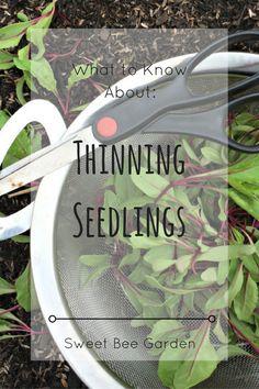 Thinning: the often overlooked task of gardening.