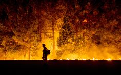 A firefighter battling the King Fire watches as a backfire burns along Highway 50 in Fresh Pond, California, USA, Sept. 16, 2014.