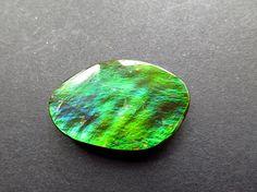 Ammolit cabochon Farbwechsler Fossil Ammolit  grün blau orange