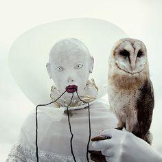 Wounderland-taxidermies-et-surrealisme-mothmeister-3
