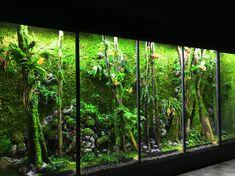 Project application, we spread the essence of the company - the source of dark green color Reptile Zoo, Reptile Cage, Reptile Enclosure, Gecko Vivarium, Aquarium Terrarium, Fish Tank Design, Plants In Bottles, Moss Garden, Paludarium