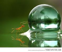 An ant and a water droplet