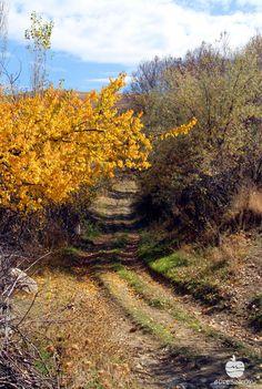 #Guresinkoyu #sonbahar #autumn