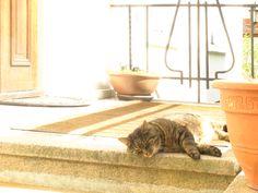 Cat, enjoying the warm sunlight of the day.