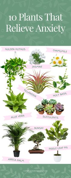 10 Best Indoor Plants for Anxiety and Stress Relief 10 Best Indoor Plants for A. 10 Best Indoor Plants for Anxiety and Stress Relief 10 Best Indoor Plants for Anxiety and Stress R Best Indoor Plants, Cool Plants, Outdoor Plants, Indoor Plants Succulents, Garden Plants, Indoor Office Plants, Indoor Flowering Plants, Foliage Plants, Outdoor Decor