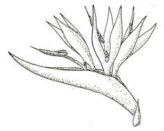 flor ave del paraiso para pintar cuadros - Buscar con Google