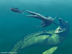 Mesozoic Earth - A Cretaceous underwater scene featuring an Enchodus, Dolichorhynchops and Mosasaur - Natural History Illustration