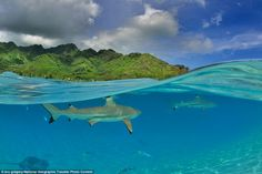Under the sea: In this picture by Bru Gregory, a shark can be seen swimming under the surface of the French Polynesian ocean. The images wer...