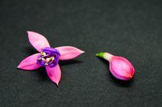 Fuchsia / Verenpisara Edible flowers / Syötävät kukat Edible Flowers, Decor, Decoration, Decorating, Deco