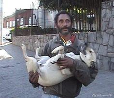 um morador de rua e um de seus cães
