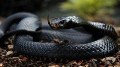 Czarny kolor - czarna mamba poligrafii