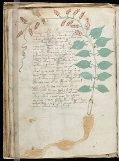 The Voynich manuscript is an illustrated codex hand-written in an unknown writing system. The vellum on which it is written has been carbon-dated to the early 15th century (1404–1438), and it may have been composed in Northern Italy during the Italian Renaissance.[1][2] The manuscript is named after Wilfrid Voynich, a Polish book dealer who purchased it in 1912.    Also known as: Beinecke MS 408