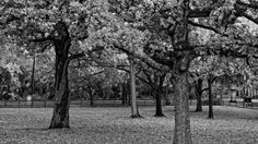 trees in black and white HDR HD Wallpapers, Wallpapers For Desktop, Android, Iphone,nature wallpapers,anime wallpapers,car wallpapers