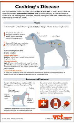 Cushing's Disease- more Cushin' for the pushin. Cats, Dogs, Horses and Humans= Cushings Hump and Pot Belly!