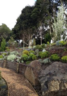 Landscaping With Palm Tree or Plants on a hill side. Hillside plantings