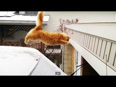 Waffles The Terrible - Funny Cat Fails Epic Jump - YouTube